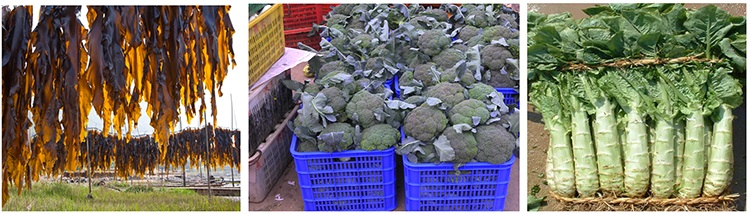 食堂蔬菜,食堂青菜,饭堂蔬菜,饭堂青菜